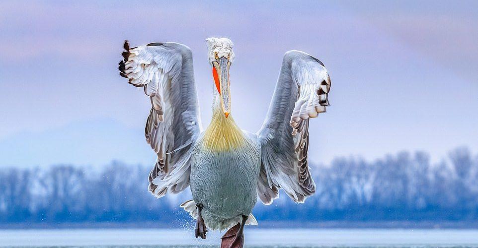الصور الفائزة في مسابقة (صور الطيور) لعام 2019