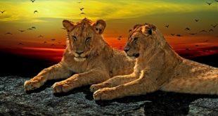 رحلة سفاري في افريقيا : اليك اشهر انواع الحيوانات هناك