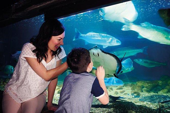Sea Life London Aquarium Admission Ticket Nature Garden Booking Deals 2021