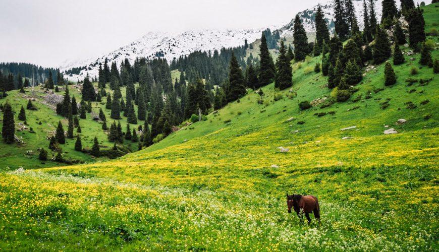 عروض إجازة الربيع | ألماتي 5 نجوم رفاهية | شاليه 3 غرف
